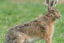 Преброиха дивите животни из ловните полета на Харманли