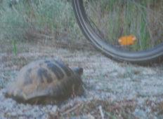Местят туристическа  пътека заради застрашени костенурки
