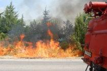 Изгоряха 30 декара бор и кедър