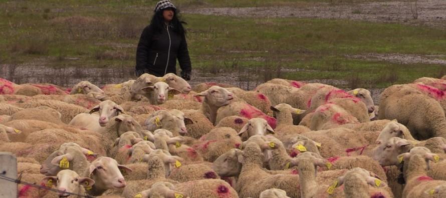 Животновъди: От Турция идват болести, искаме дезинфекция!