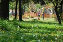 Само един кандидат се яви за Градската градина на Харманли