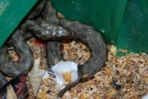Намериха змия в кош за боклук