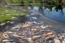 Търсят причина за измряла риба край ТЕЦ-овете