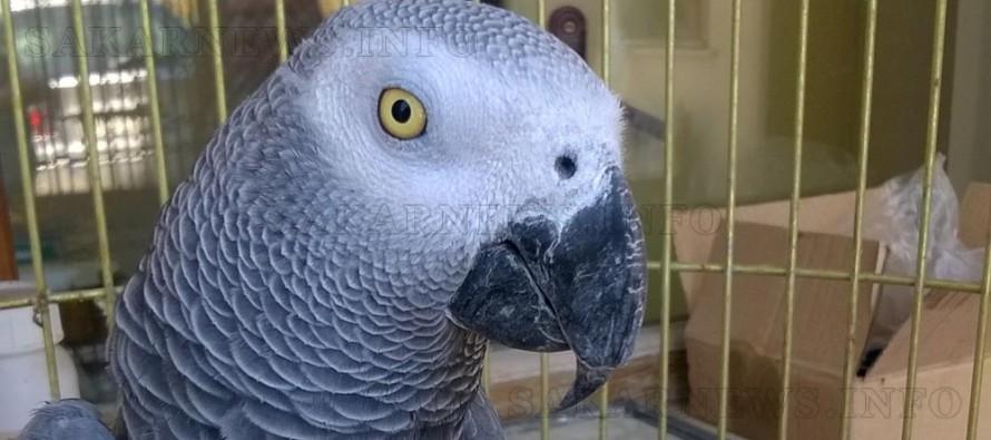 На Капитан Андреево спряха внос на папагали – жако