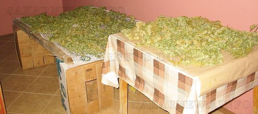 В дома на 65-годишна намериха 6 килограма канабис