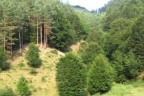 Над 1000 декара нови гори ще залесява  Държавното горско стопанство