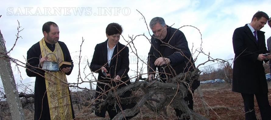"""Вицепремиер и кмет зарязаха на лозята на """"Кастра Рубра"""""""