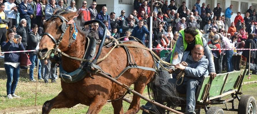 Превърнаха кушиите  в атракции за ромите