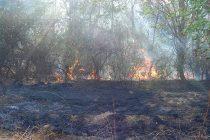 Голям горски пожар се разпростира из Маджаровско