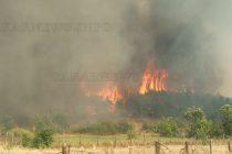 Изгоряха още 2 000 декара 40-годишни борове