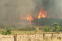 Огромен пожар глътна 500 дка борова гора