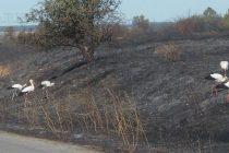 От пожарите – доволни само щъркелите