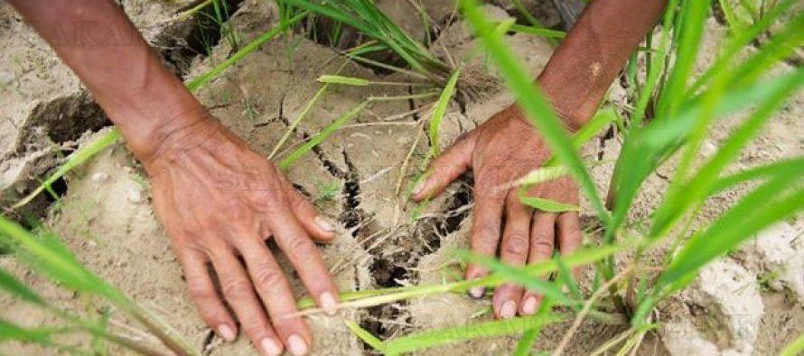 Продължителната суша пресуши  и чешмите по селата