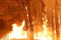 Пожар по непредпазливост излезе солен на предизвикалия го