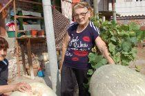 Инсулт не попречи на жена да отгледа тикви-гиганти в двора си