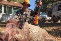 Ловният сезон за Боляровските ловци – активен и благодатен