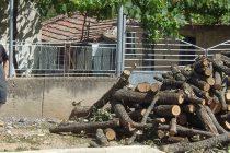 """Кметът на Устрем Христо Илчев: """"Проблемът с дървата за огрев в селото е решен"""""""