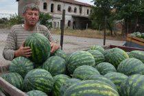 Продажбата на дини от Любимец падна рекордно