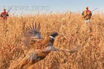 Ловджии се спуснаха по полетата за  мигриращ дивеч