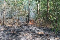 Поредният пожарът в Сакар планина е локализиран