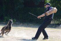 Кучета демонстрираха умения на изпит в Харманли