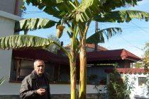 Учител – пенсионер твори  чудеса в дома си