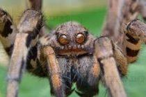 За разликата между мъдрата съпруга и женския паяк