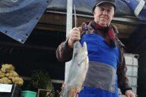 Ще се повиши ли цената на рибата за Никулден?