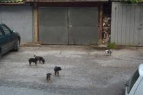 Бездомните кучета стават сериозен проблем