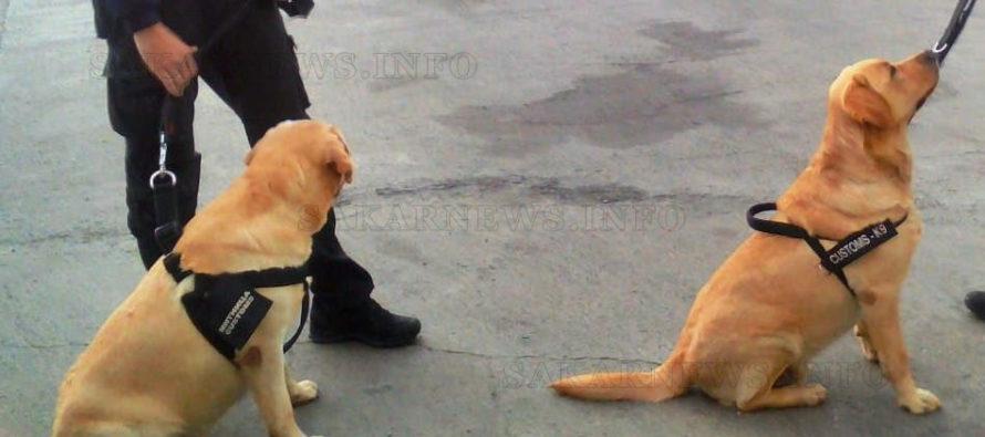 Обучени кучета ще разкриват контрабандистите на цигари