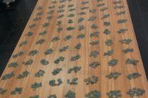 Задържаха 3 000 монети, сечени преди 2 200 години