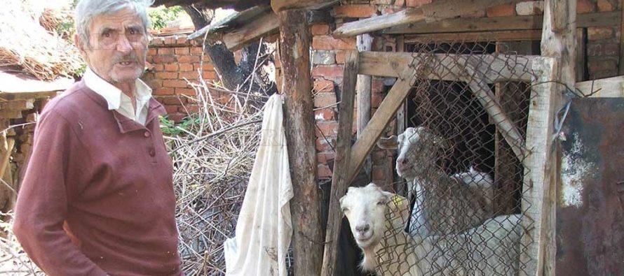 Болестта бруцелоза бе открита и в животни в Харманли