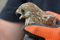Български проект за  рядка птица се бори за  две награди на ЕК