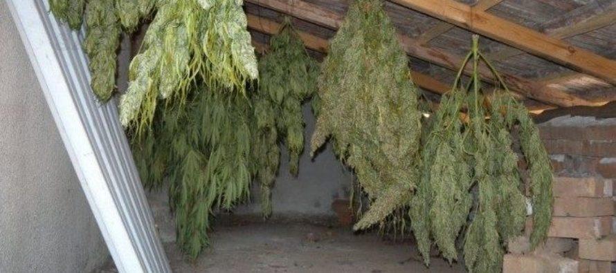 Откриха 6 кг канабис в къща на харманлиец