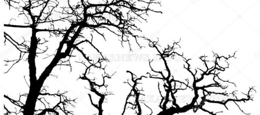 Опасните дървета в  близост до пътищата  ще бъдат премахнати