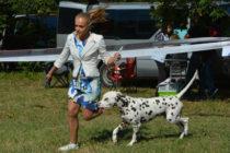 Национална изложба събра  кучета от различни породи