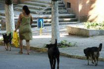 Кучета и Пенка плашаг деца в центъра на Симеоновград