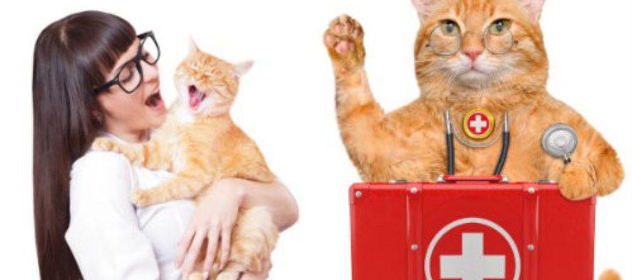 Здравни причини, за да си вземете котка вкъщи