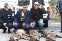 Из ловните полета на Сакар и  Родопи бродят 18 вълка по-малко