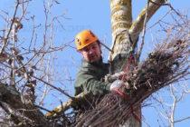 Природозщитници създават домове за царските орли