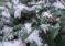 """""""Зимата – радост или бедствие"""" –  новата тема на фотоконкурса ни"""