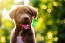 Куче може да донесе смартфон на притежателя си