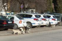 Безпризорните кучета и котки в Тополовград се увеличават