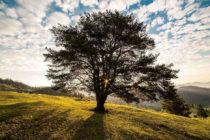 Пет дървета в област Хасково са обявени за вековни