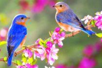 """""""Очарованието на пролетта"""" – новата тема на фотоконкурса"""
