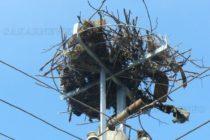 Още 168 платформи за гнезда, монтира енергото