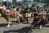 Фризийски жребец стана победител в кушията в село Бисер