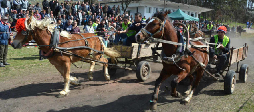Елитен кон спечели първото място на кушията в село Бисер