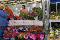 Аромат от цветя се носи в центъра на Харманли