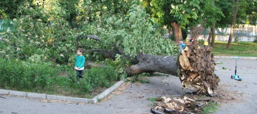 Вятър изтръгна дърво и го сгромоляса върху пейка в Градската градина